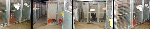 kennels-collage